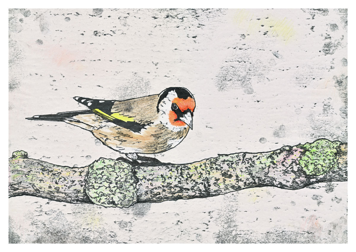 A hand coloured monoprint of a Goldfinch. Available as Fine Art Giclee Print.