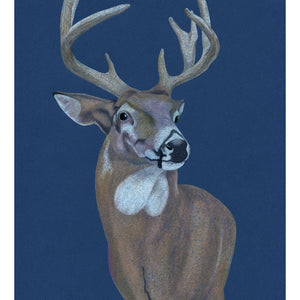 Artwork of a stag, seen in Arizona. Pencil on card. Available as a Giclee Print.
