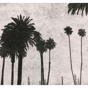 Monoprint of Palm Trees, California. Available as a Giclee Print.