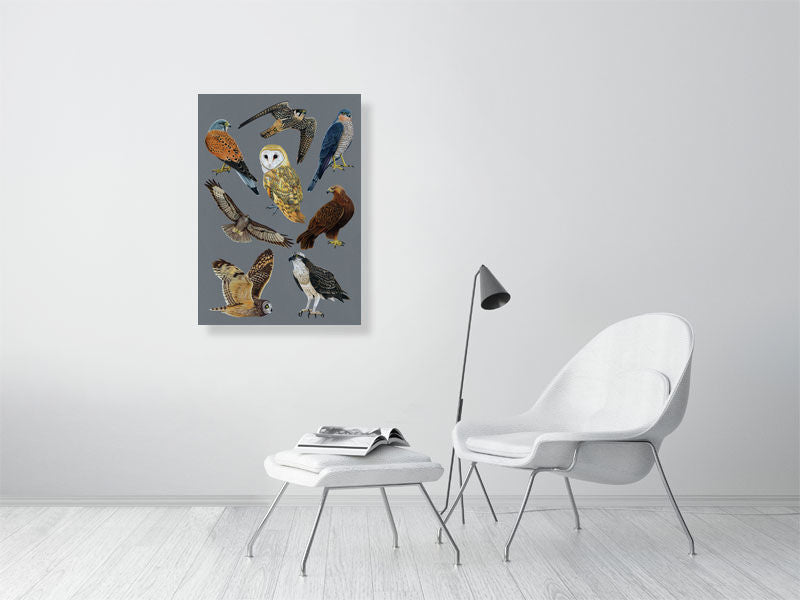 British Birds of Prey Illustration (Colour Pencil on card) Giclee Print