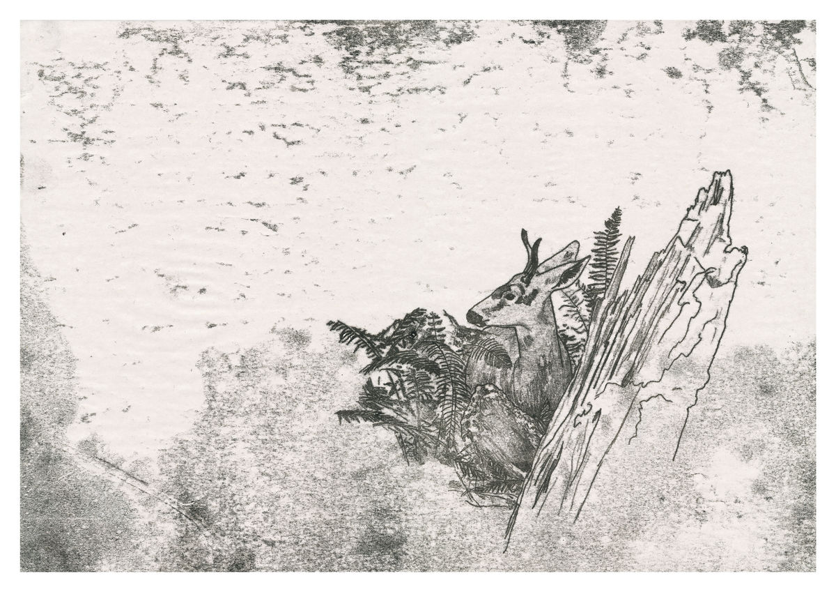 A monoprint of a deer in the woods. Available as a Giclee Fine Art Print.