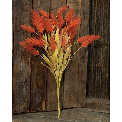 Dog Tail Grass Bush, Orange, 20""