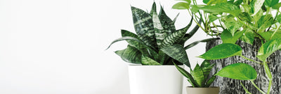 4 Houseplants That Are Easy to Maintain