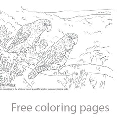 Free parrot coloring pages