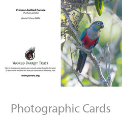 Parrot cards