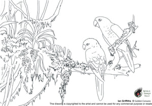 Free coloring page - Golden Conures II