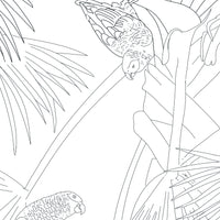 Free coloring page - Grey Parrots