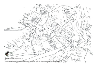 Free coloring page - Amazon Parrots