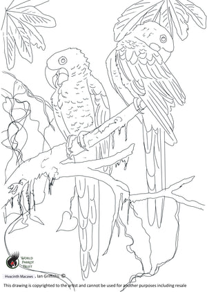 Free coloring page - Hyacinth Macaws