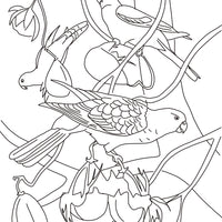 Free coloring page - Red-Winged Parrots