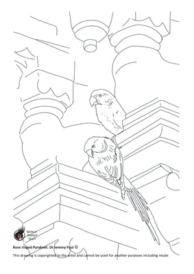 Free coloring page - Rose ringed Parakeet