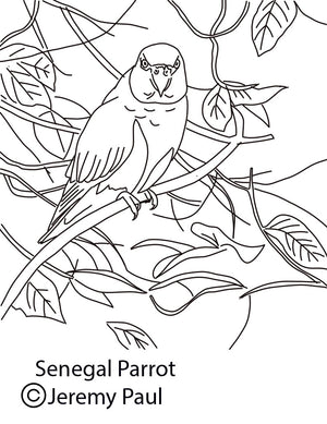 Free coloring page - Senegal Parrot