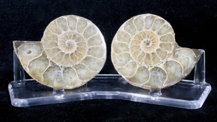 Calcite replaced ammonite split pair with display stand