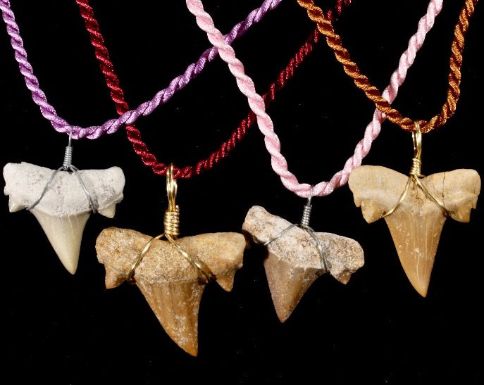 Shark Tooth Pendant on Cord