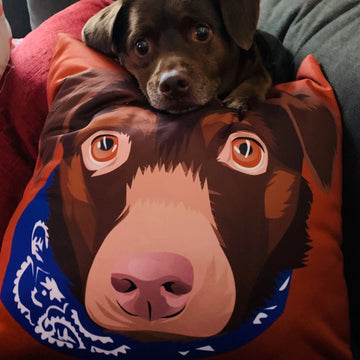 Custom Pet Couch Pillow [NEW]