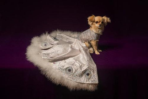 The Most Expensive Dog Items | Furdrobe