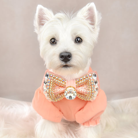 Mia the Westie in Sparkly Dog Bow
