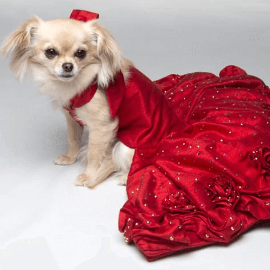 A Dozen Red Roses Dog Gown