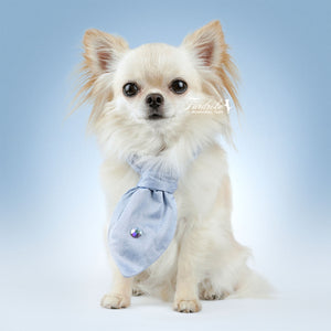 Baby Blue Dog Cravat