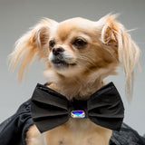 Classic Black Bow Tie for Dogs