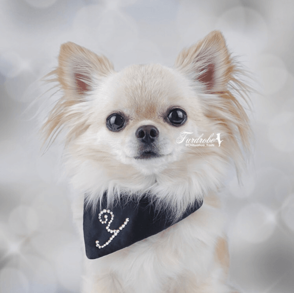 Medium Dog Bandana in Black Savoy