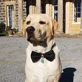 Black Bejewelled Dog Bow Tie with Drop