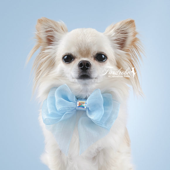 Blue Organza Dog Bow with Small Swarovski Crystal