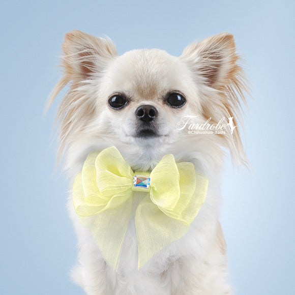 Yellow Organza Dog Bow with Small Swarovski Crystal
