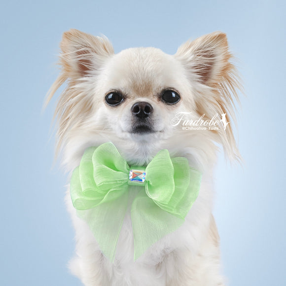 Green Organza Dog Bow with Small Swarovski Crystal