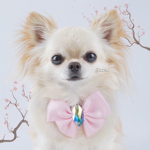 Sakura Pink Organza Butterfly Dog Bow with Large Swarovski Crystal