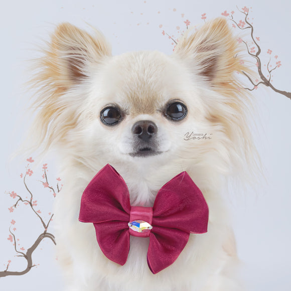 Sakura Cherry organza dog bow with small Swarovski Crystal