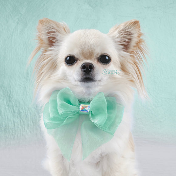 Tiffany Dreams Organza Dog Bow with Small Swarovski Crystal
