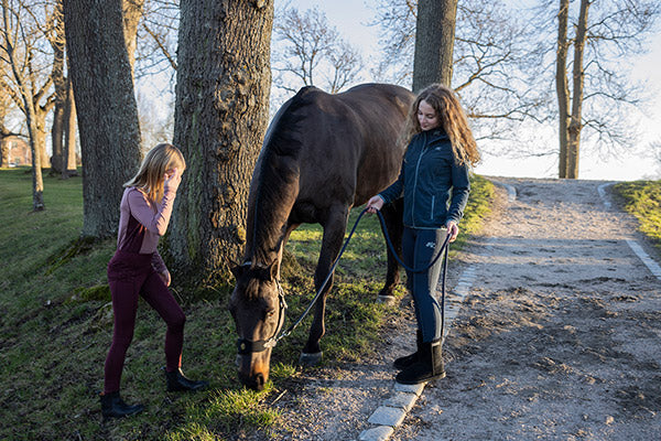 Horse Care From Autumn into Winter