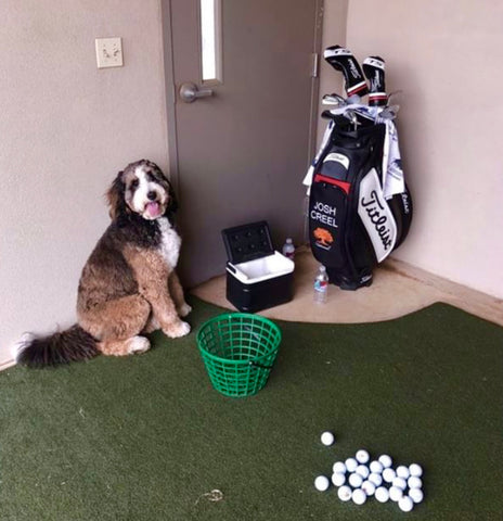 Berne Doodle, Doodle dog, golf, professional golfer, best dog treats