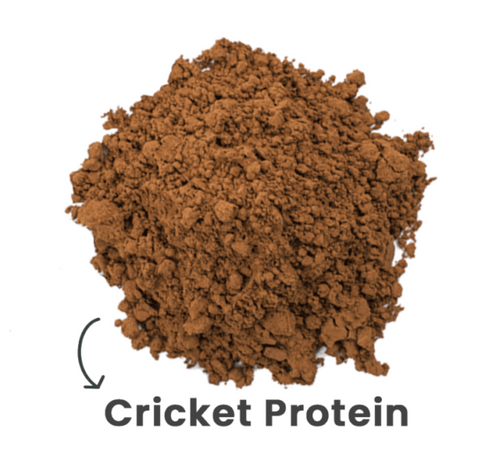 cricket protein, best protein for dogs, healthy snack for dogs, dog treats