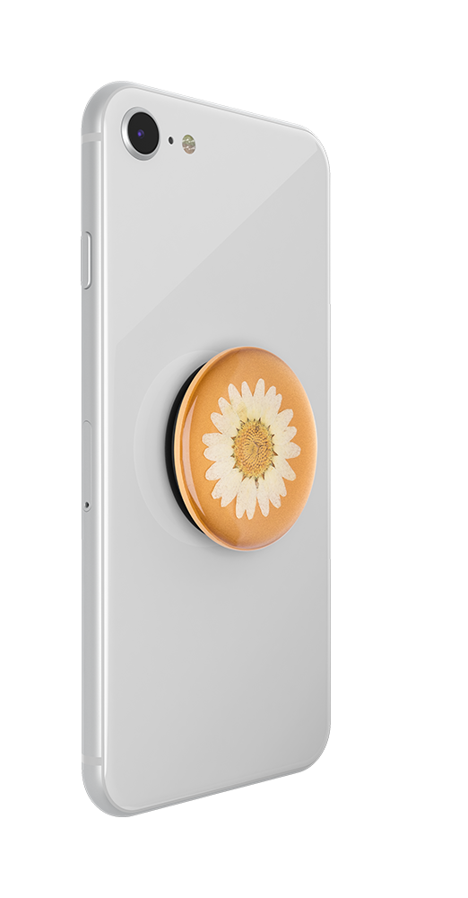 Pressed Flower White Daisy, PopSockets