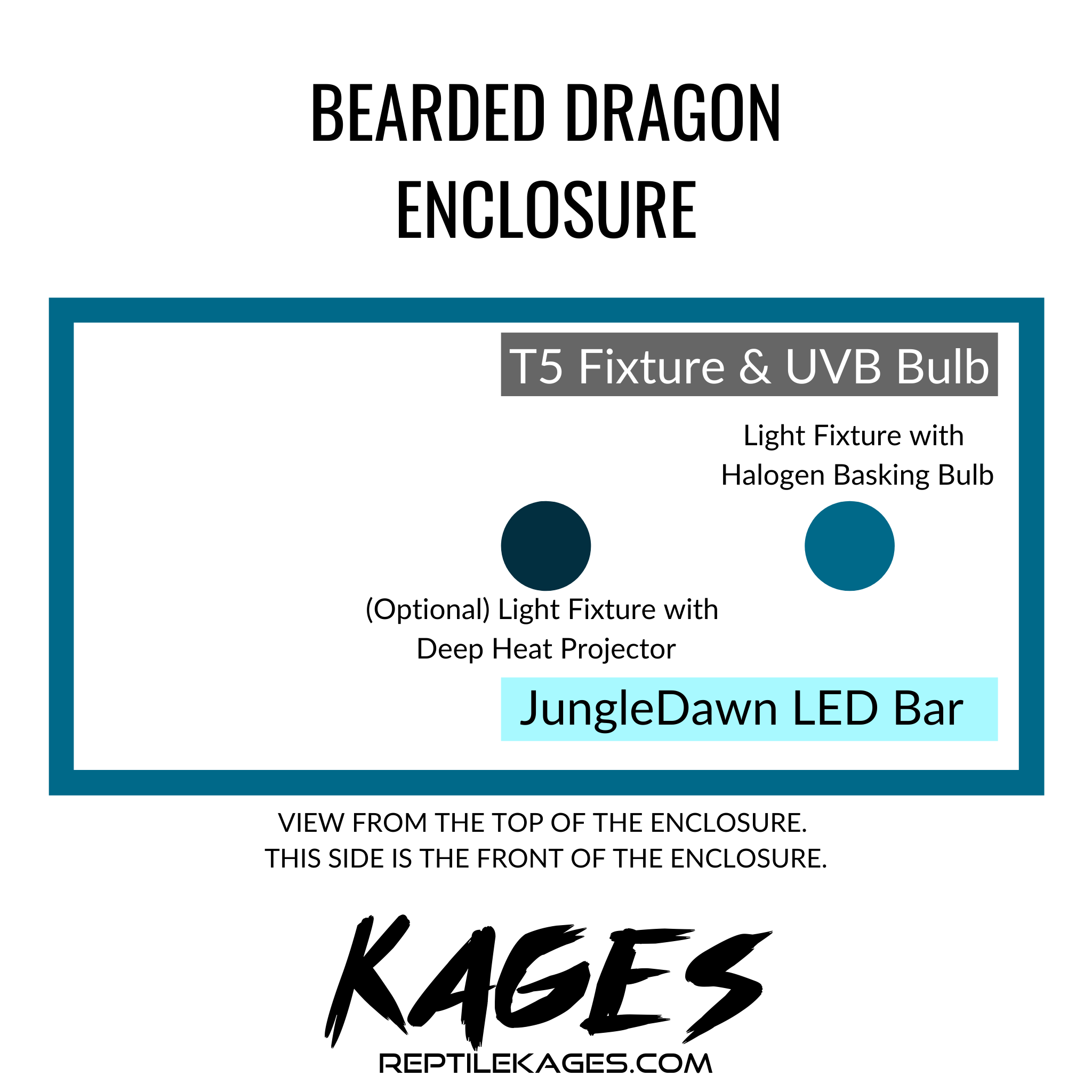 Bearded Dragon Cage Guide Kages Custom Reptile Enclosures