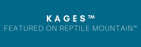 Kages Custom Reptile Enclosures Review from Reptile Mountain