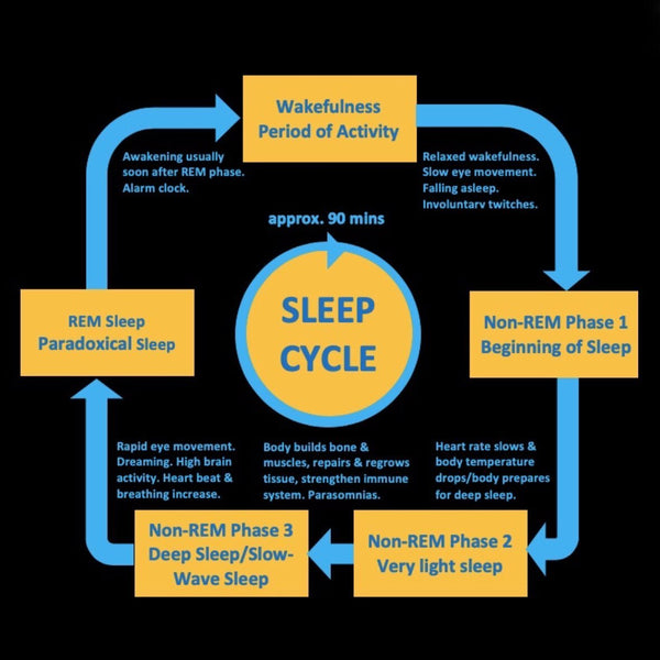 Sleep Stages & Functions