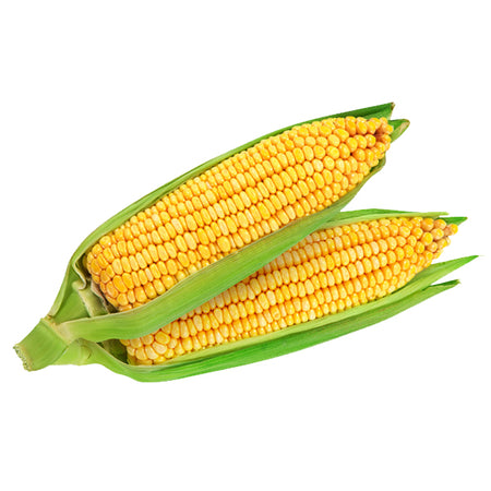 Organic Cooked Sweetcorn 2pcs