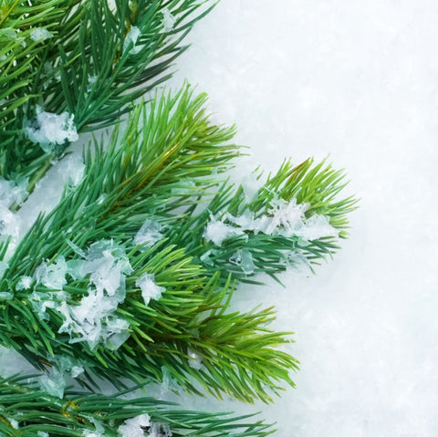 Balsam Fir Refresher Oil