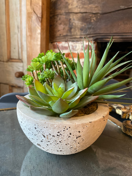 Assorted Green Succulents in Bowl