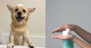 Don't let your furkid suffer anymore. 70% of pet owners make these mistakes when bathing their pets. Are you one of them?