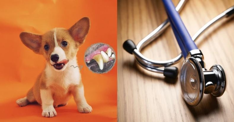 Keep eating snacks but never brush teeth? Don't let your furkid suffer from oral health issues!