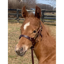 Load image into Gallery viewer, Double Crown Foal Halter with plate