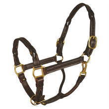 Load image into Gallery viewer, Havana Twisted Leather Halter