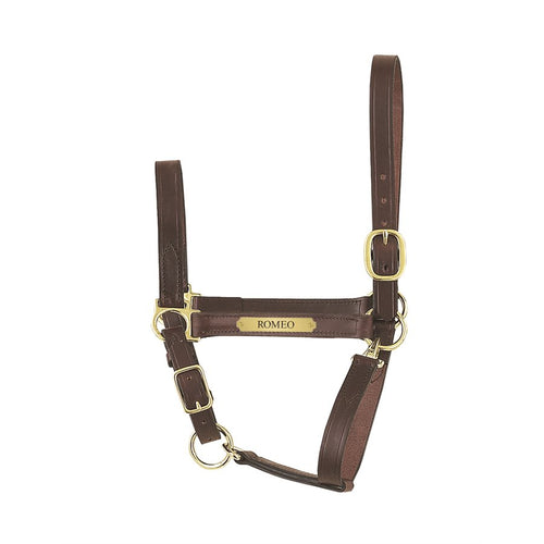 Economy Leather Halter w/plate