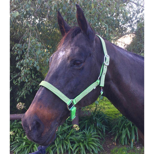 Over-Trot Glitter Halter-Over-Trot-Tacklet