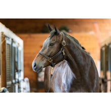 Load image into Gallery viewer, Track Style Leather Turnout Halter w/snap