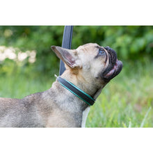 Load image into Gallery viewer, Padded Leather Dog Collar